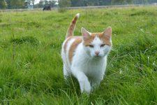 NetAP Tierrefugium Auswahl für Chico (115)