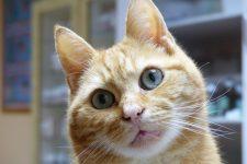 NetAP Tierrefugium Auswahl für Chico (123)