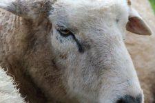 NetAP Tierrefugium Auswahl für Chico (16)