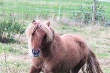 NetAP Tierrefugium Auswahl für Chico (25)