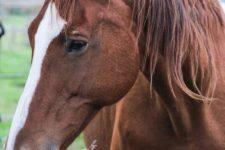 NetAP Tierrefugium Auswahl für Chico (31)