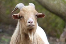 NetAP Tierrefugium Auswahl für Chico (46)