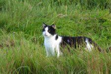 NetAP Tierrefugium Auswahl für Chico (58)