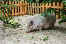 NetAP Tierrefugium Auswahl für Chico (71)