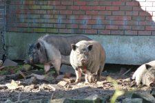 NetAP Tierrefugium Auswahl für Chico (80)